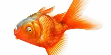 160929-dead-fish