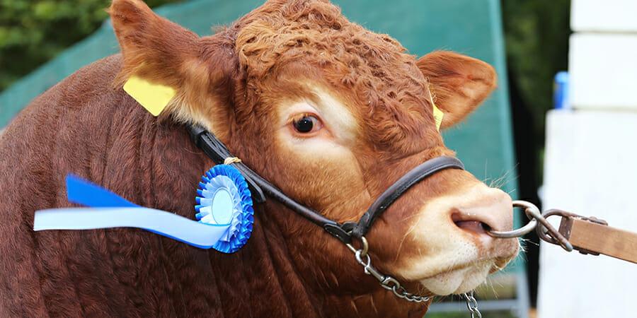 161208-bull
